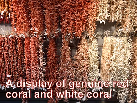 A display of genuine red and white coral.