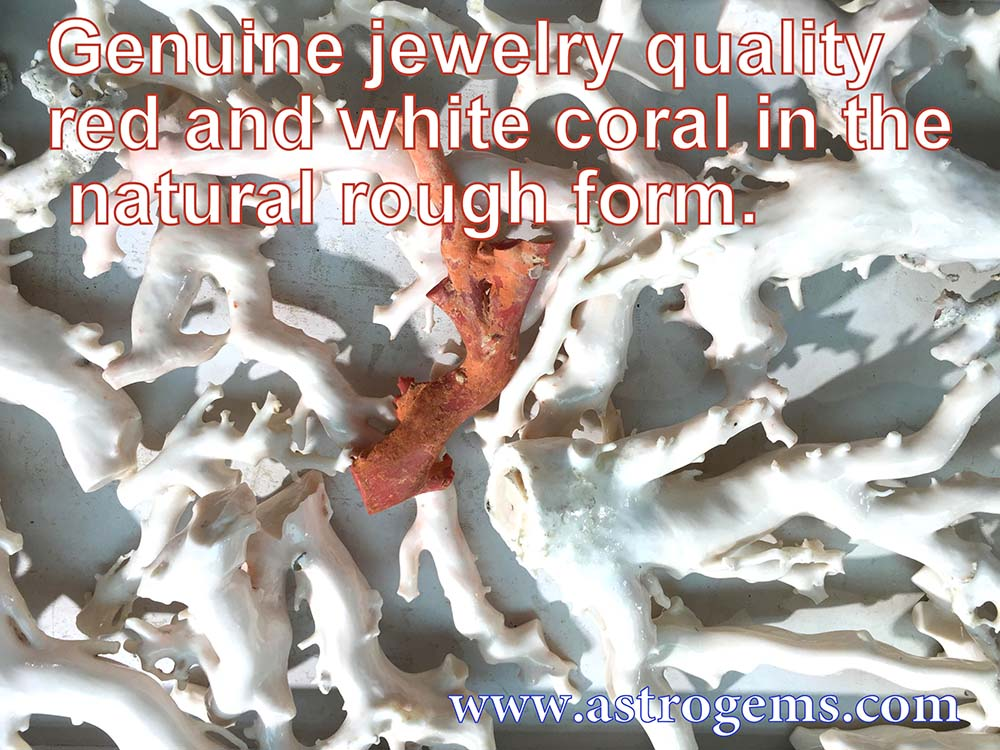 Genuine jewelry quality red and white coral in the natural rough form.