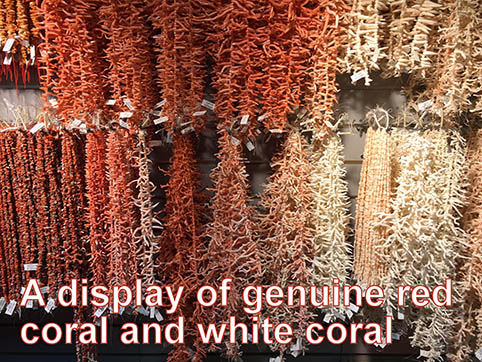A display of genuine red coral and white coral.