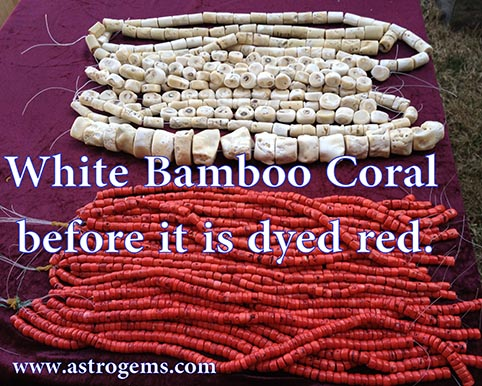 White bamboo coral before it is dyed red.