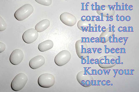 Bleached White Coral