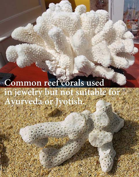 common reef coral can be found in jewelry but it is not suitable for ayurvedic or jyotish items